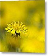 Yellow On Yellow Dandelion Metal Print