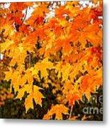 Yellow Orange Fall Tree Metal Print