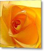 Yellow Orange Rose Metal Print