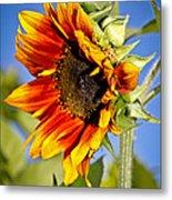 Yellow Orange Sunflower Metal Print