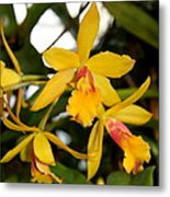 Yellow Orchid Metal Print