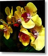 Yellow Orchids Shadow And Light Metal Print