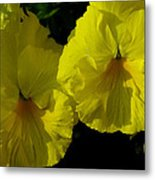 Yellow Pansies  Metal Print