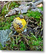 Yellow Patches Baby Mushroom - Amanita Muscaria Metal Print