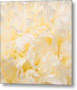 Yellow Peony Petals Metal Print