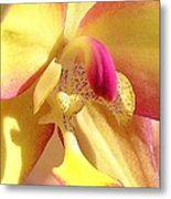 Yellow Pink Orchid Metal Print