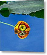 Yellow Pond Lily Metal Print