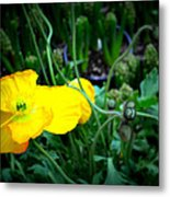 Yellow Poppy Xl Format Floral Photography Metal Print