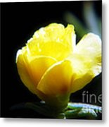 Yellow Primrose Metal Print
