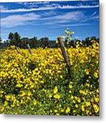 Yellow Profusion Metal Print