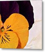 Yellow Purple Pansy Metal Print