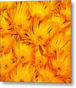 Yellow Radiance  Metal Print