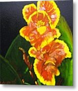 Yellow-red Canna Lily Metal Print