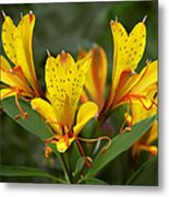 Yellow Red Flower Metal Print
