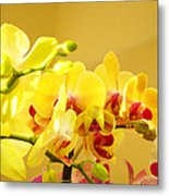 Yellow Red Orchid Flowers Art Prints Orchids Metal Print