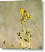 Yellow-red Wildflower With Texture Metal Print