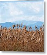 Yellow Reeds And Blue Mountains Metal Print
