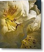 Yellow Rhododendron Metal Print