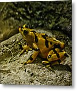 Yellow Rock Jumper Metal Print