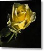 Yellow Rose 11 Metal Print