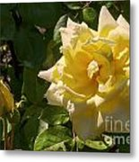 Yellow Rose And Bud Metal Print