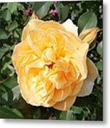 Yellow Rose And Two Rosebuds Metal Print