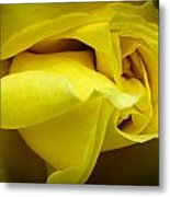 Yellow Rose Close Up. Metal Print by Slavica Koceva