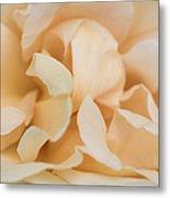 Yellow Rose - Featured 3 Metal Print