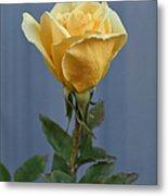 Yellow Rose Greeting Card Metal Print