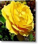 Yellow Rose IIi Metal Print