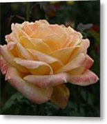 Yellow Rose Kissed By Pink Fairy Metal Print