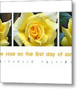 Yellow Rose On The First Day Of Summer Metal Print