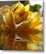 Yellow Rose Wet And Dry Metal Print