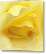 Yellow Roses Triptych Panel Metal Print