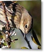 Yellow-rumped Warbler - Precious Metal Print