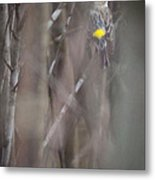 Yellow-rumpled Warbler Metal Print