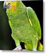 Yellow-shouldered Amazon Parrot Metal Print