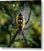 Yellow Spider Metal Print
