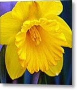 Yellow Spring Daffodil Metal Print