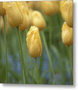 Yellow Spring Metal Print by Sarah Crites