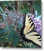 Yellow Swallowtail Butterfly Metal Print