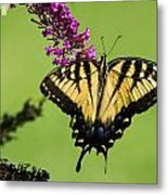 Yellow Swallowtail Metal Print