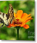 Yellow Swallowtail Metal Print