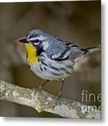 Yellow-throated Warbler Metal Print