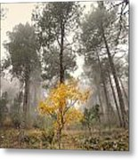 Yellow Tree In The Foggy Forest Metal Print