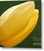 Yellow Tulip 1 Metal Print