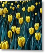 Yellow Tulip Field Metal Print