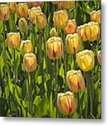 Yellow Tulip Flowers On Windmill Island In Holland Michigan Metal Print