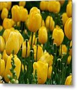 Yellow Tulip Sea Metal Print