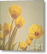 Yellow Tulips Metal Print by Diana Kraleva